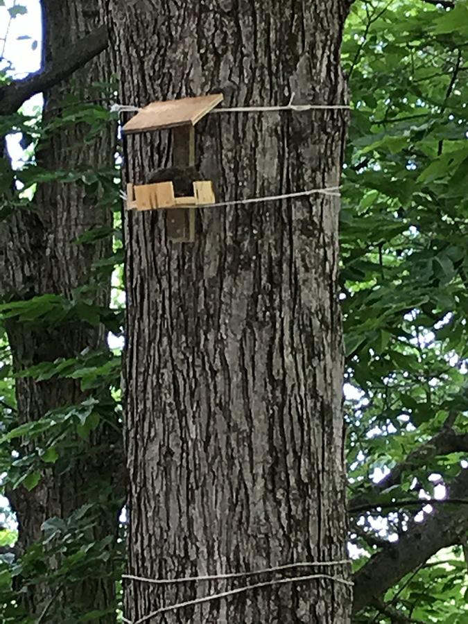 Relocated Nest