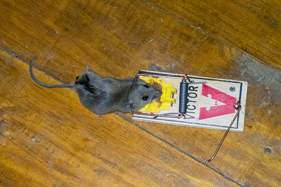 Mouse #1