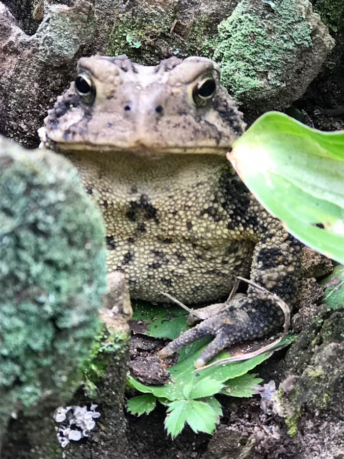 Sub-Grade Stone Complete - Toad