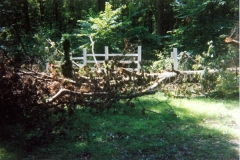 Trees Down - Fence
