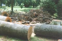 Old Metal Shed - Oak Trees