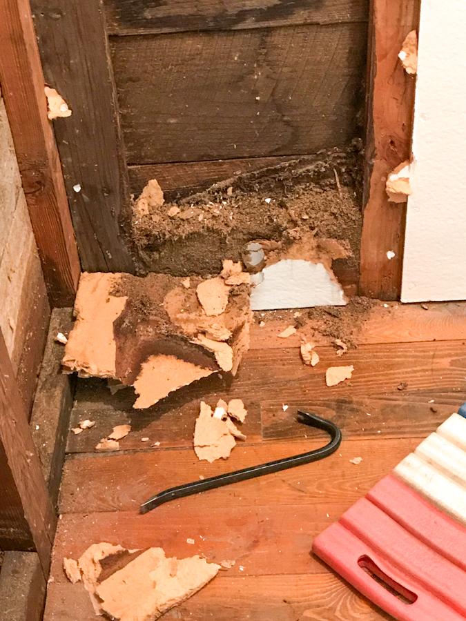 Carpenter Ant Damage